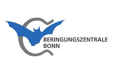 Fledermaus Beringungszentrale Bonn